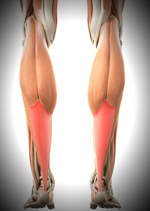 aşil tendonu